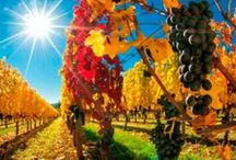Fall Color in the Willamette Valley / Great places for seeing fall foliage in the Willamette Valley - Oregon Wine Country.