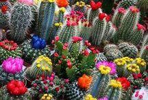 flores e suculentas