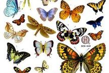 borboletas / by Elisabete DE  Oliveira