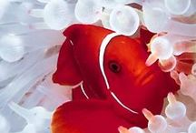 peixes e curiosidades do mar