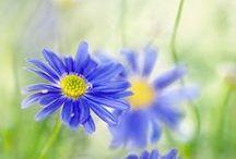 Flowers / by Nga Doan