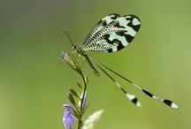 SpReAd  YoUr   WiNgS  >!<  & OtHeR AwSoMe BuGs / by D. e. B. r. A.    *    L.