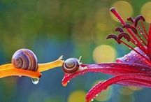 Snails / by Pam King