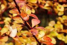 autumn 2014 / autumn scenery