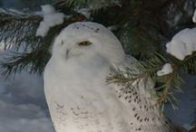 Owls / Have always liked owls, the white ones are my favorite. / by Lucille Kerner