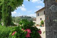 AZIENDA / Produzione e vendita vino Chianti Classico e olio extravergine di oliva
