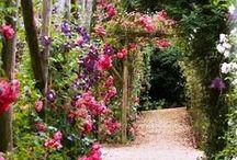 summer garden / plants for summer garden