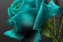 Turquesa - Verde / Colores