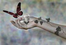 Mariposas / Butterflies