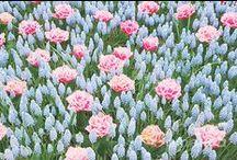 FlowersFineArt / All types of flowers #AnastasyYarmolovichFineArtPhotography  #ArtForHome #Photography #interiorDesign #flowers #nature