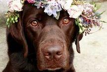 Haustiere bei der Hochzeit / Inspirationen, um sein Haustier bei der Hochzeit mit einzubeziehen. Vom Hund als Ringträger bis zur Katze als Teil des Hochzeitsshootings.