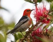 Birds of the NSW South and Far South Coastal Regions. / Photos were taken at Tathra, Pambula and Merimbula on the far south coast and Nowra, Culburra Beach and Lake Wollumboola on the south coast.