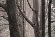 alberi (trees)