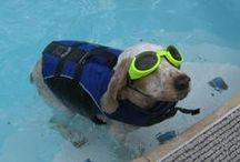 Pool-Friendly Pups / Watch as man's best friend drools, dives and doggy paddles through some of the world's friendliest swimming pools!
