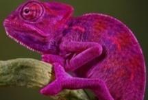 color ~ purple / by Rachel