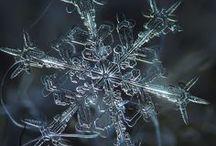 Joys of Christmas! / by Windi Walker