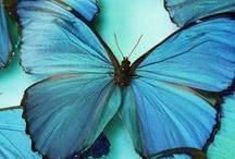 color ~ blue / by Rachel
