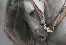 Horses  / Horses  / by Mai Miura