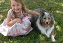 Sheltie Love / My Sheltie is a Blue Merle named Rainy / by Vickie VanDoorn