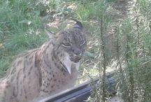 Zoo de Jerez / Reserva de Vida Animal