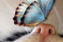 Cuteness & Beauty / Our cute and lovely animal friends.
