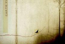 Feathers & Flight...
