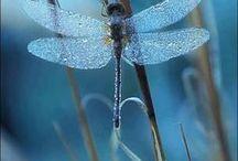 Dragonflies / Vackra bilder med tema trollsländor
