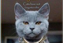 Kitties!! / I love cats! they are the most amazing creatures, they will love you no matter what....  / by JC