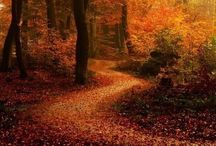 Paths to ponder.....