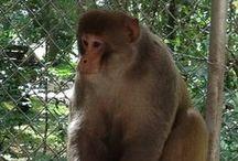 Mystery Monkey of Tampa / Mystery Monkey of Tampa Bay at Dade City's Wild Things