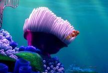 Finding Nemo :)