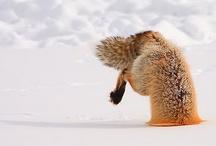 Wildlife / by Bill Werle