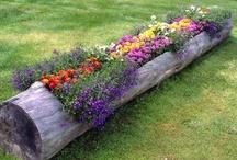 Gardening / by Carrie Winders