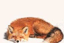 Foxy / by May Bernardes