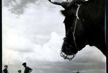 Robert Doisneau, photographe / Robert Doisneau, photographe / by Danielle -Kirby