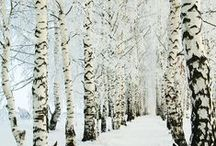 Winter Wonderland Theme / by Invisible Blue