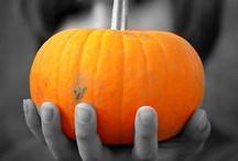 Pumpkins / by Heidi Whitcomb