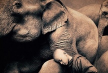 All Things Animal / I am a die hard animal lover - especially elephants, owls, turtles and giraffes. I can never get enough!