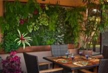 Living Walls & Vertical Gardening / by Ms Coquina