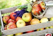 Økologisk Firmafrugt - øko frugt i Frugtkurve og Frugtkasser / Frugtkurven tilbyder både Øko Frugtkurve og Øko Frugtkasserne i lige præcis det styk antal som I har behov for. Vælg den helt rette økologiske firmafrugtordning til netop jeres virksomhed.   Økologisk Firmafrugt er massevis af frugt med naturlig smag samt med en store og årestidstilpasset variation.   Se de mange muligheder for Økologisk Firmafrugt, Frugtordning, Frugtkurve eller Frugtkasser, herunder>  http://www.frugtkurven.dk/oekologisk-frugt/