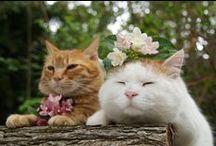 Macskák/Cats