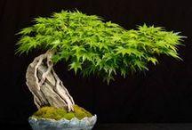 hiperrealismo plantas y...