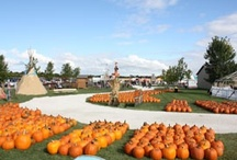 Agritourism / From pumpkin patches to Alpacas, celebrate agriculture in Northern Illinois!