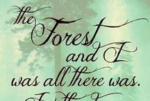 My enchanted forest