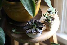 Interiors / Plants