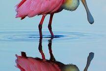 Crush: Animal Reflections