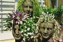 Puutarha/kasvit/kukat