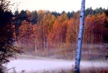 Luontokuvia/kuvia