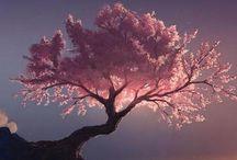ihmeellinen luonto