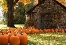 Halloween/Fall  / by Olivia Chalmers